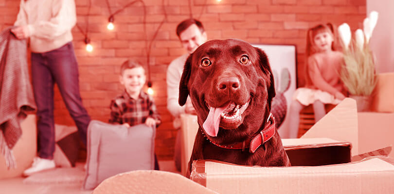 Animais em condomínio: cuidados para os donos de pet