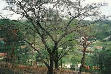 Foto Lote em Condomínio à venda  em Lagoa Santa - Imagem 09